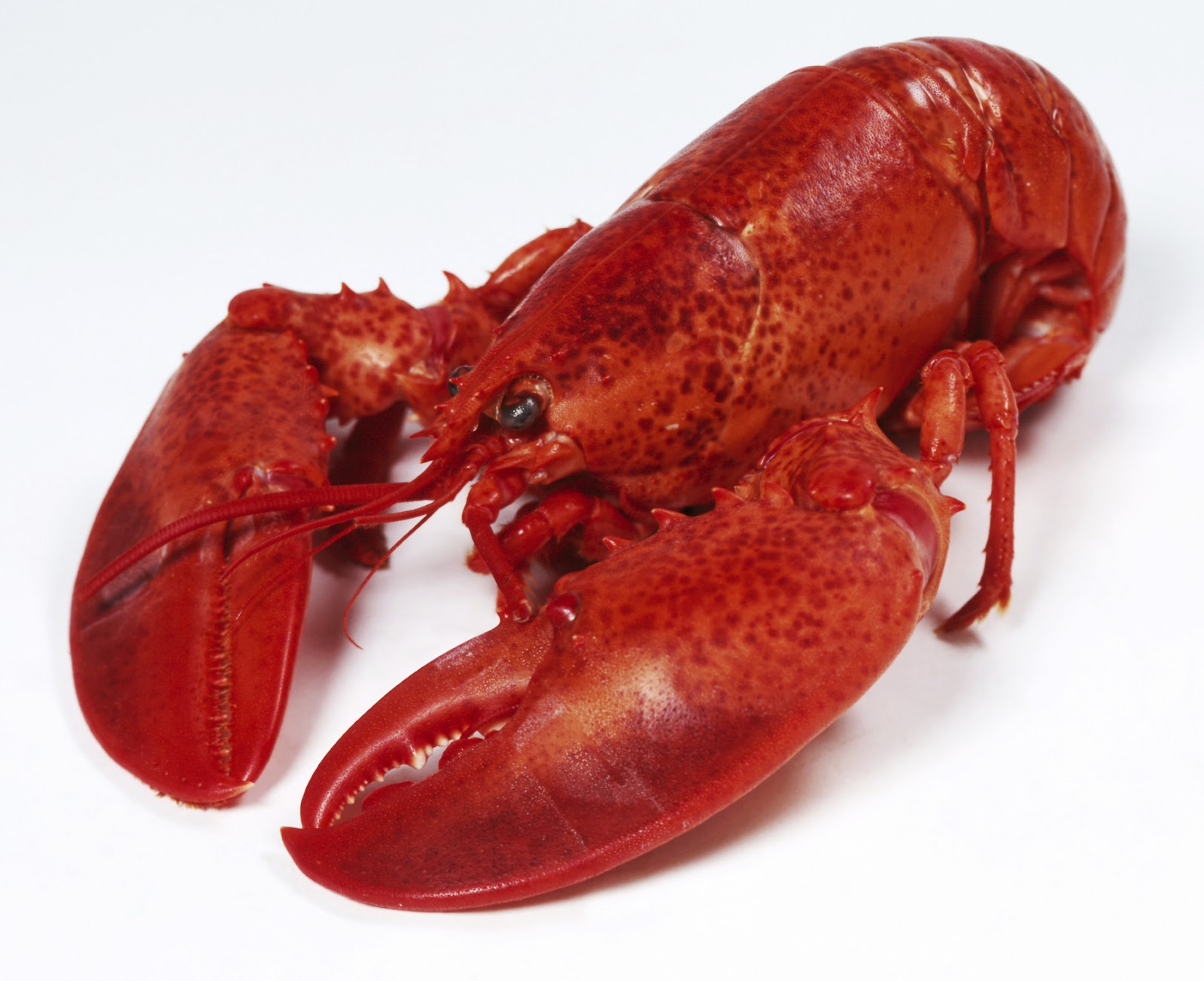 The Lobster Is Not About Seafood Our Relationship With
