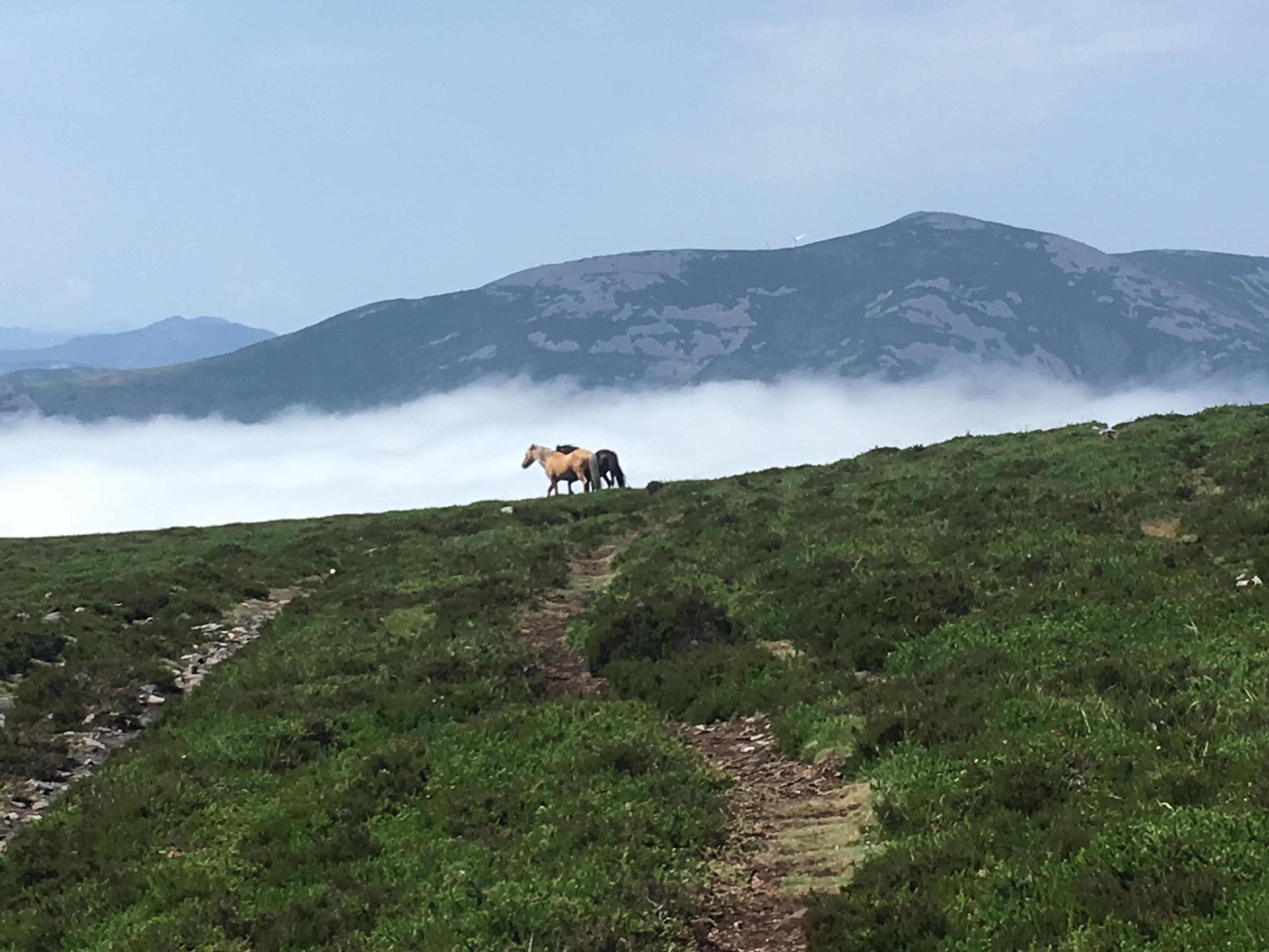 horses on the Camino de Santiago showing freedom