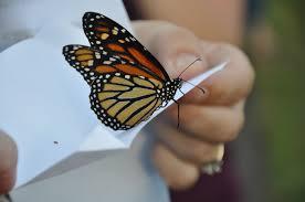 http://www.wishuponabutterfly.com/weddings/butterfly-packages/