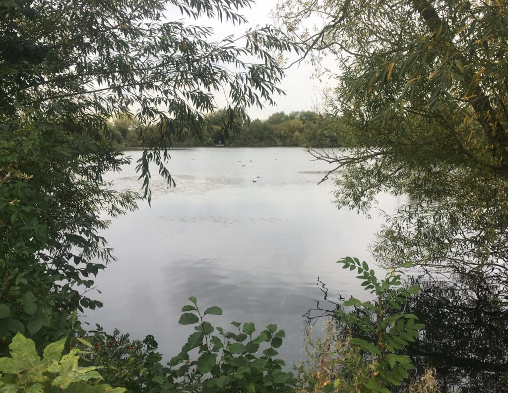 Cheshunt Lake in the Lee Valley is home to ducks, herons and moorhens and other birds I didn't see!