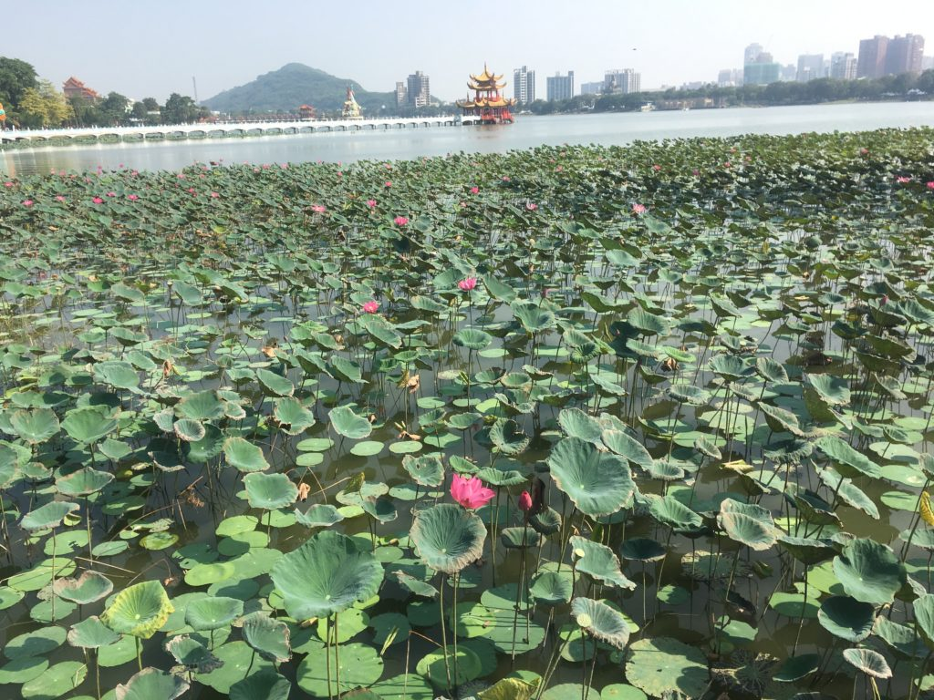 Lotus at Lotus Pond