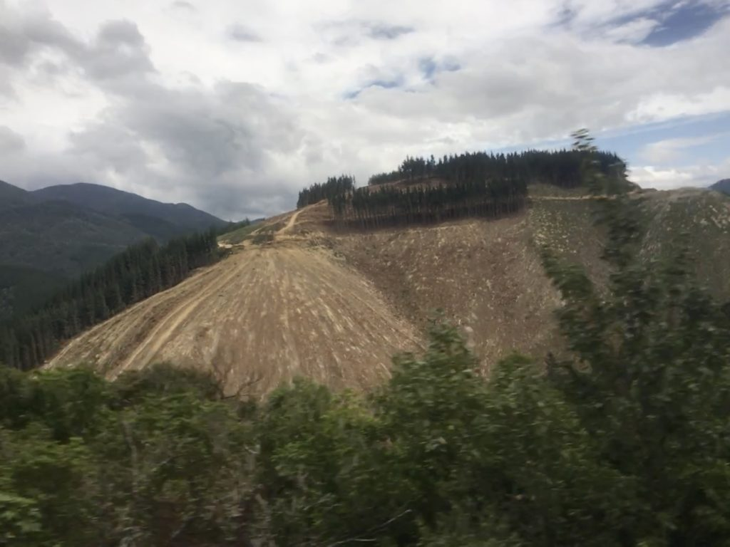 pine trees harvested on the tourist roads of NZ